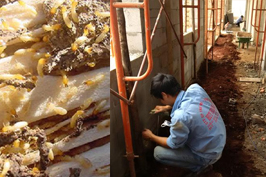 Diệt côn trùng quận Bình Tân