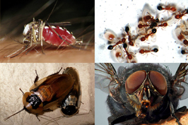 Diệt côn trùng quận Tân Bình